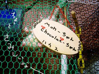 もんきちのおうちの表札です。 「もんちゃんショコラちゃんハウス」 でも、今のとこもんきちひとりハウスです。。しょぼん