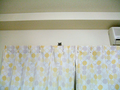 カーテンの上を散歩中のもんきち。