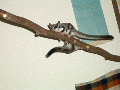 長ーーーい木の枝で遊ぶふたり☆